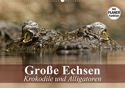 Große Echsen. Krokodile und Alligatoren (Wandkalender 2021 DIN A2 quer)