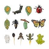 Gadpiparty 3 Juegos de Ciclo de Vida de Plástico Juguetes Mariquita Kit de Crecimiento Rana Ciclo de Vida Mariposa Kit de Ciclo de Vida Bugs Kife Juguetes