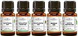 Pack 5 huiles essentielles BIO - Sélection Hiver - Ravintsara, Eucalyptius radié, Menthe poivrée, Niaouli, Pin Sylvestre -...