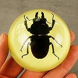 YZZR Espécimen de Insecto,Resina de Insectos,Espécimen de Resina de Insectos,Juego Insectos Reales Resina Arácnido Espécimen Stem Set Bichos Lupa Póster Datos Curiosos