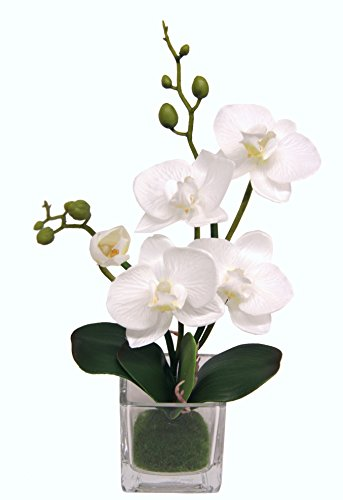 Flair Flower Mini Phalaenopsis im Glas, Stoff, weiß, 24 x 12 x 9 cm