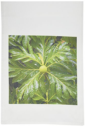 3dRose fl_85048_1 Breadfruit Tree, Moorea, French Polynesia OC13 DPB0078 Douglas Peebles Garden Flag, 12 by 18-Inch