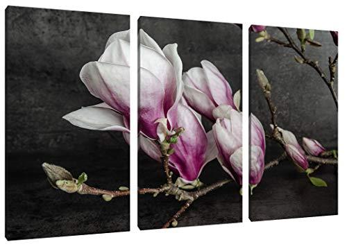 Pixxprint Aufblühende Magnolie isoliert als Leinwandbild 3 teilig/Größe: 120x80 cm/Wandbild/Kunstdruck/fertig bespannt