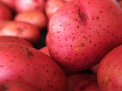 5lb Pack of Seed Potatoes - Variety