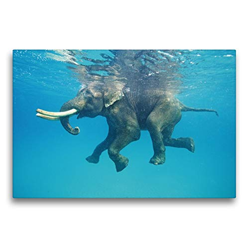 Premium textiel canvas 75 x 50 cm dwarsformaat Ook dikke huiden hebben een verfrissing nodig - een drijvende olifant | muurschildering, HD-beeld op spieraam, afgewerkt beeld op hoogwaardig vlies, canvasdruk van CALVENDO