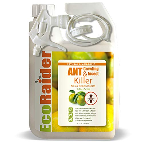EcoRaider Ant Killer (32 oz), also Kills Bed Bugs, Remote Trigger Sprayer, Instant Kill + 4-Weeks Prevention, Non-Toxic + Child Pet Friendl