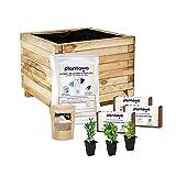 Kit de Cultivo Plantas Aromáticas con Jardinera 40 x 40 cm, Kit de Autocultivo de Iniciación para Jardín, Plantas Naturales de Aromáticas para Huerto Urbano