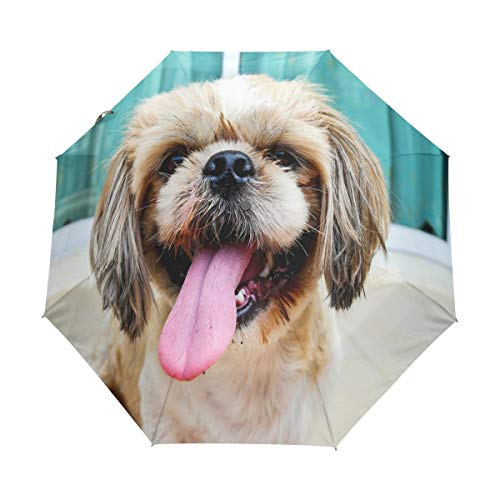 Doreen Dalton Focus - Paraguas para Perro, 3 Pliegues,
