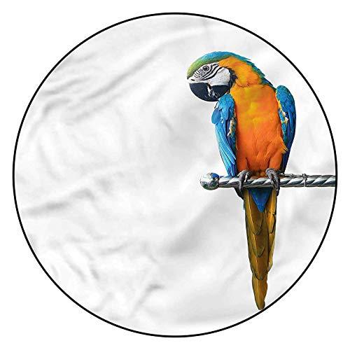 3D Bird Pattern Area Rugs Carpets,5' Round,Tropic Macaw Bird Perching Floor Carpet with Non Slip Backing for Bedroom Livingroom Dorm Kids Room Indoor Home Decorative