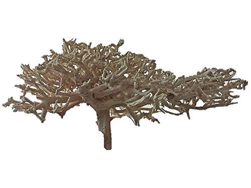 OrinocoDeco Petit arbre pour crevettes Blanc S