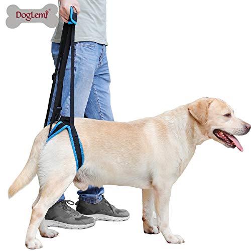 Arnés de elevación para perros, ayuda a elevar la parte posterior del perro, soporte para perros mayores, eritos, enfermos y discapacitados