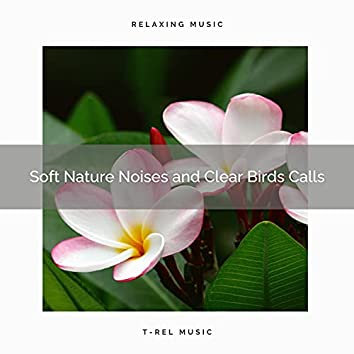 ! ! ! ! ! Soft Nature Noises and Clear Birds Calls