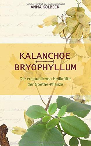 Kalanchoe - Bryophyllum: Die erstaunlichen Heilkräfte der Goethe-Pflanze