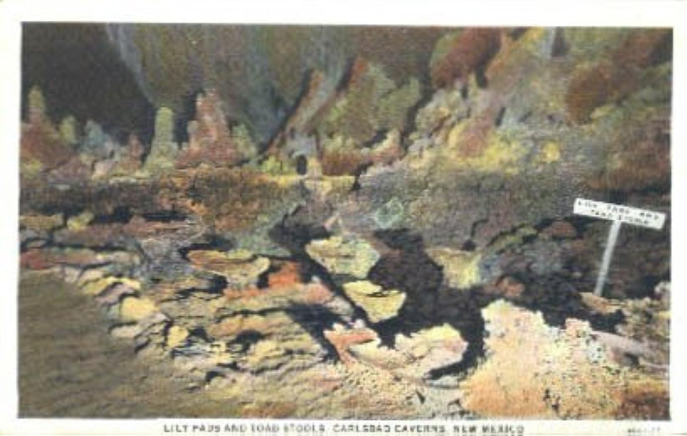 Carlsbad Caverns, New Mexico Postcard