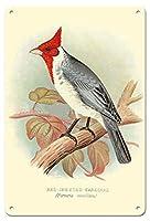 枢機卿、赤い紋付きの犬。 1899年アンティーク鳥イラストメタル缶 レトロな家の壁の装飾錫金属ギフト装飾ヴィンテージプラーク