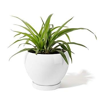 Best tall ceramic pots Reviews