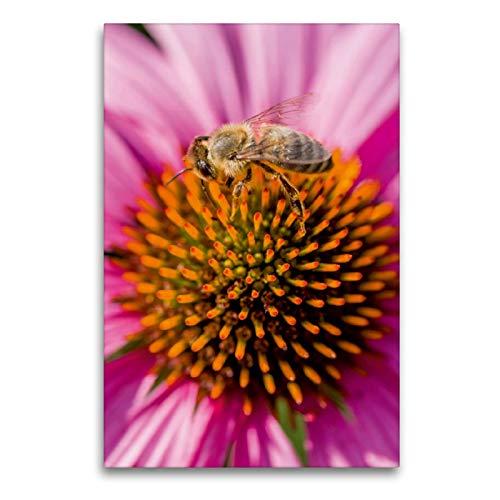 CALVENDO Premium Textil-Leinwand 60 x 90 cm Hoch-Format Biene im Bauerngarten, Leinwanddruck von Mark Bangert
