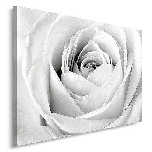 Feeby, Leinwandbild, Bilder, Wand Bild, Wandbilder, Kunstdruck 80x120cm, WEIßE Rose