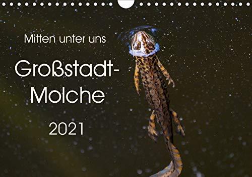 Mitten unter uns - Großstadt-Molche (Wandkalender 2021 DIN A4 quer)
