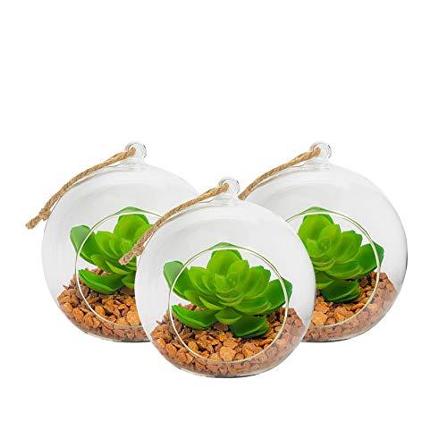 Nicola Spring Terrario de Cristal para Plantas - Ideal para Cactus - Se Puede Colgar o Poner sobre una Mesa - 120mm - Pack de 3