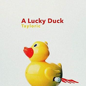 A Lucky Duck