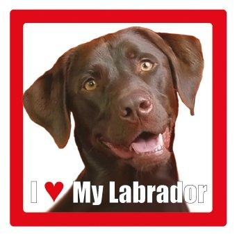 Labrador (Marron) Nom de chien/animal domestique Dessous de Verre présentée par Sterling Effectz