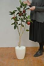 光触媒 リンゴ 120cm