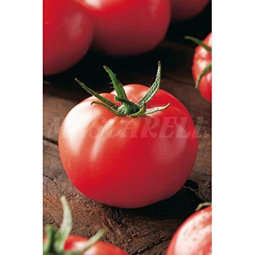 Semilla hortícola - Tomate tres cantos - Mascarell