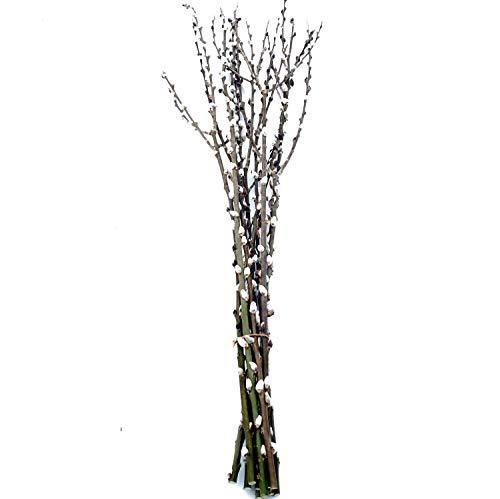 10 Extra Lange Palmkätzchenzweige ca. 100 cm: Salweidezweige für große Bodenvase   Frühlings- und Oster-Deko Natur   Weidenkätzchen