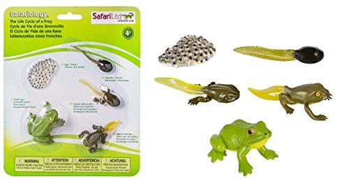 Safari 269129 Lebenszyklus eines Frosches