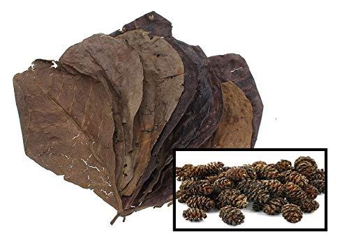 10 Catappa Leaves & 25 Alder Cones for Aquariums (Indian Almond Leaves, Terminilia) 5-8