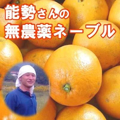 無農薬ネーブル 5kg 能勢さんの ネーブルオレンジ