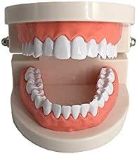 Standard Teeth Model, YOUYA DENTAL Kids Dental Teaching Study Supplies Adult Standard Typodont Demonstration Teeth Model(Without Wisdom Teeth)