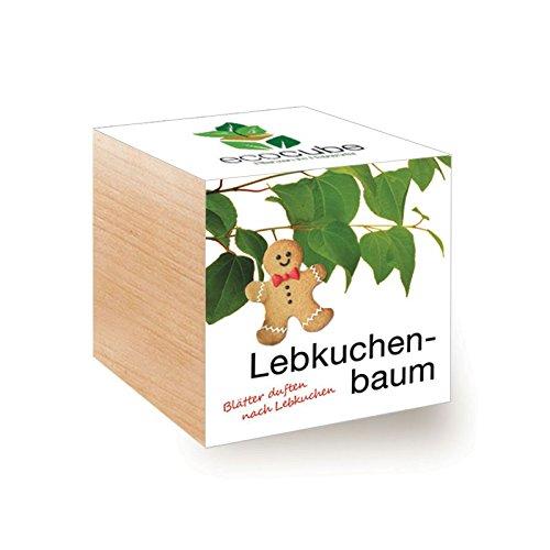 Ecocube Lebkuchenbaum im Holzwürfel