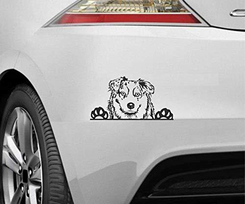 myrockshirt Peeking Dog Spähender Hund Australian Shepherd Typ7 ca.20cm Aufkleber,Sticker,Decal,Autoaufkleber,UV&Waschanlagenfest,Profi-Qualität,Wandtattoo
