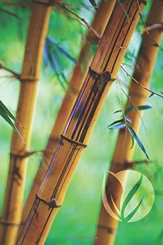 Bamboo Forest Blank Book: Notebook Journal Sketch (Go Green 150 Blank)
