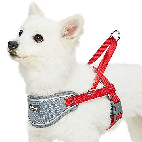 Harness for 3 Legged Dog