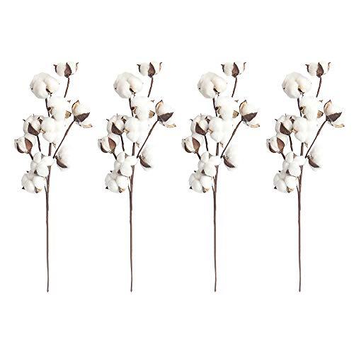 4 Stück natürliche weiße Baumwollstiele, 10 Baumwollkapseln je Stiel, 53,3 cm, Blumenplektren, Landhaus-Stil, Deko für Schaufenster, Hochzeiten, Zuhause, Möbel, echte Baumwolle.