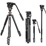 Professionelles Video-Stativ-Einbeinstativ-Kit, Cayer AF2451 67-Zoll-Aluminium-Teleskop-Flip-Lock-Stativ mit H4-Fluidkopf und Abnehmbarer Stativbasis für DSLR-Kameras und Camcorder
