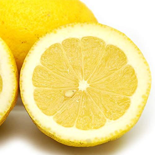 【訳あり】国産レモン10kg 無農薬・無化学肥料 神奈川県小田原産