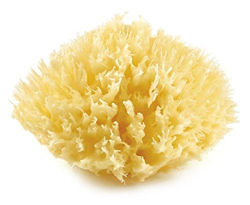 THERMOBABY Honeycomb Eponge de Mer Méditerranée Taille 10