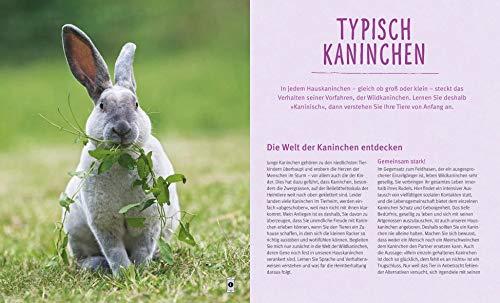 Kaninchen im Außengehege: Pures Frischluft-Vergnügen - 4