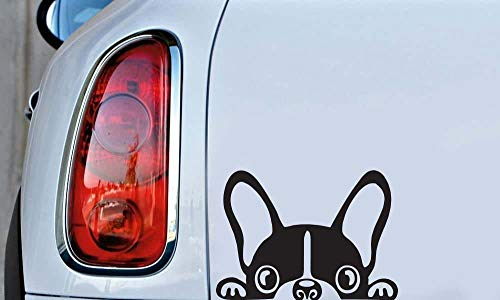 Peeking French Bull Dog Colour - Black - Size - 5' x 3' Die Cut Vinyl Decal Sticker for Bumper & Car Window Laptops, MacBook, Trucks, Wall and More