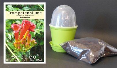 Seedeo Anzuchtset Trompetenblume (Campsis radicans)