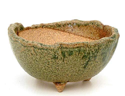 Bonsai Pavia | Macetas para Bonsais Japonesa Hecha a Mano 11 cm | Cerámica de Yokkaichi Esmaltada en Color Verde Claro | Tamaño 11x5 cm