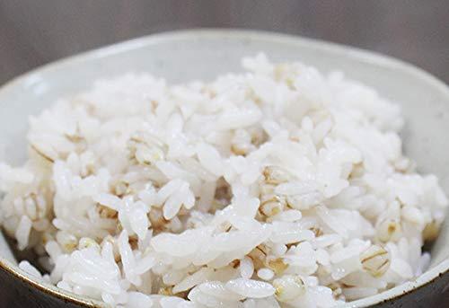 国産もち麦1kg媛もち麥