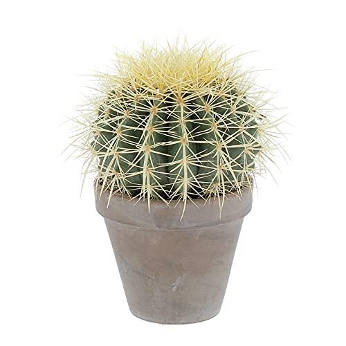 KENTIS - Echinocactus Grusonii - Cactus - Piante Grasse Vere - H 20-30 cm Vaso in Terracotta Ø 14 cm