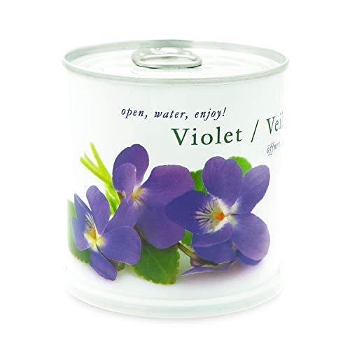 MacFlowers Veilchen - Blumen in der Dose