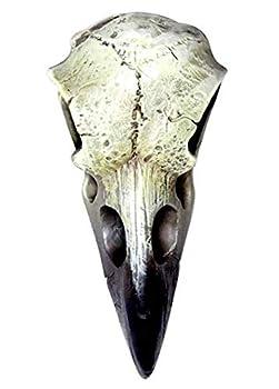 Best bird skull Reviews