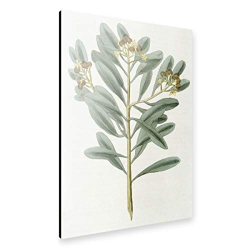 artboxONE Alu-Print 30x20 cm Zimtpflanze von Künstler Culture Images